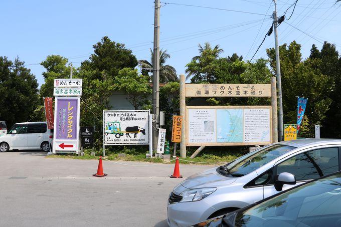 備瀬のフクギ並木は沖縄美ら海水族館からすぐ