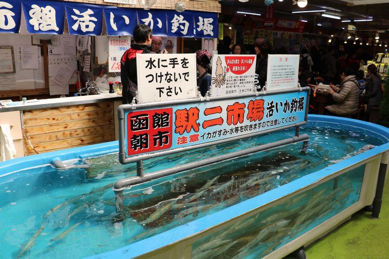 函館朝市駅二市場で大人気!「活いか釣堀」に挑戦して、新鮮なイカの刺身を堪能しよう