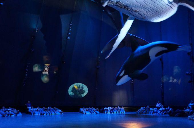 クジラのお腹を眺められる!寝転がっての海・体験コーナー