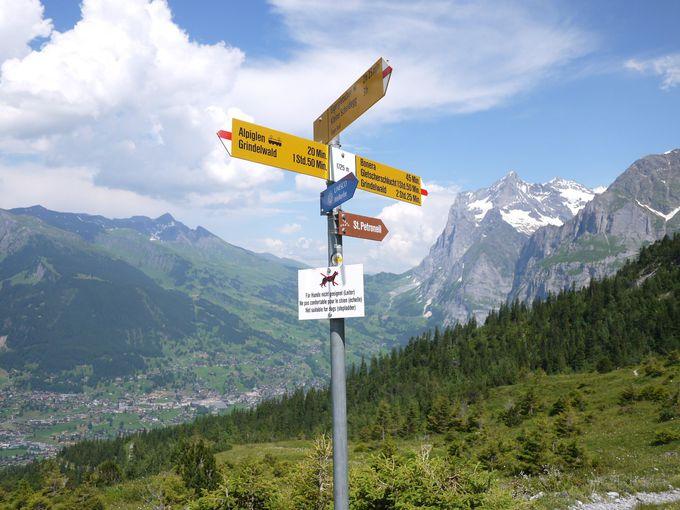 そろそろハイキングも終盤です
