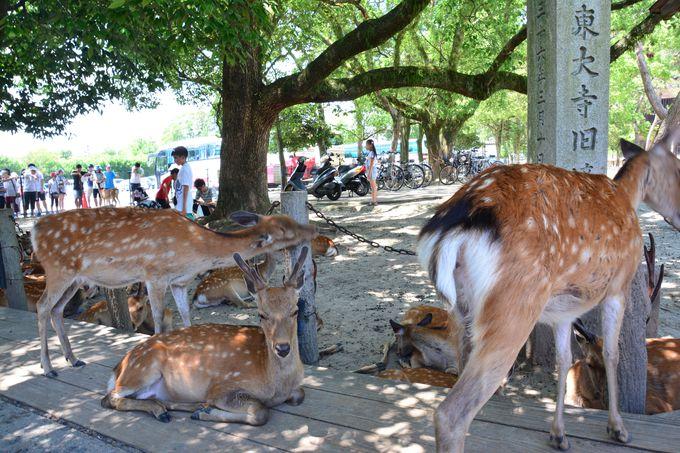 鹿さんがたくさんいる