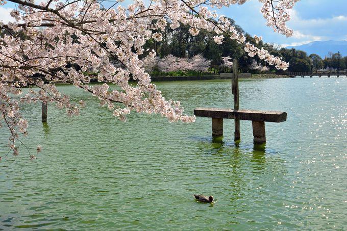 日本の建築美に負けない美しさの深田池