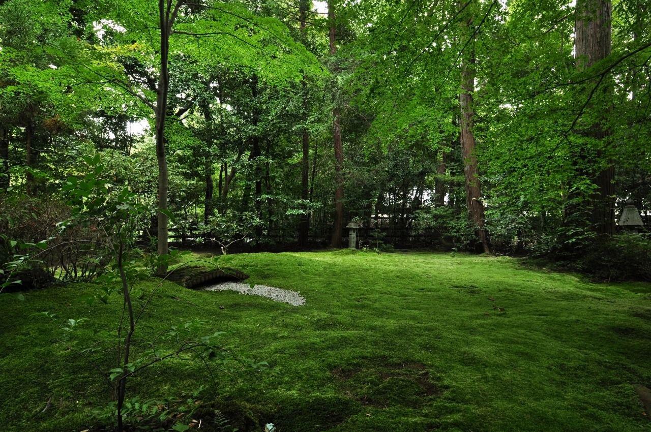 美しき苔庭