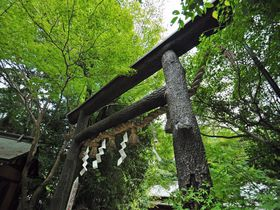 京都を代表する美しさ!源氏物語にも登場する野宮神社