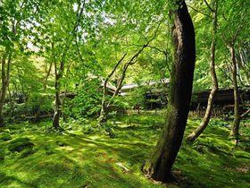 平清盛ゆかりの地にして緑と苔が美しい 京都「祇王寺」