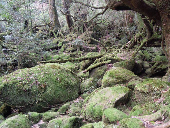 ジブリの世界に惹きこまれる白谷雲水峡