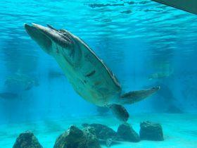 無料エリアが充実!沖縄「美ら海水族館」をもっと満喫しちゃおう|沖縄県|トラベルjp<たびねす>