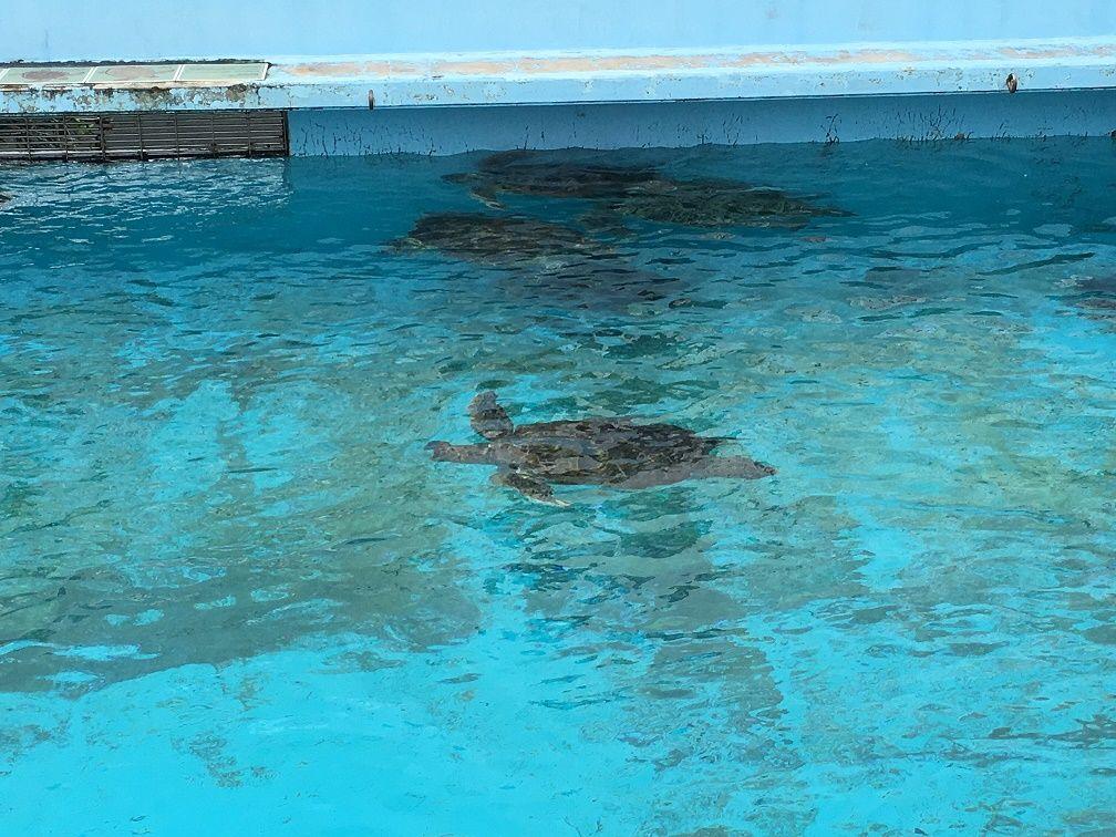 ウミガメの産卵場所まであるウミガメ館