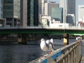 東京「品川駅」から徒歩圏内で楽しめる!癒しスポット5選|東京都|トラベルjp<たびねす>