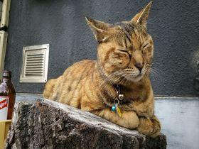 看板猫に会いに行こう!東京「谷中」懐かしい街並み散策|東京都|トラベルjp<たびねす>