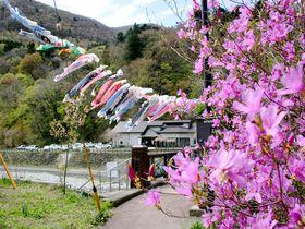 那須塩原「板室温泉」5月の風物詩!100匹の鯉のぼりが那珂川を泳ぐ