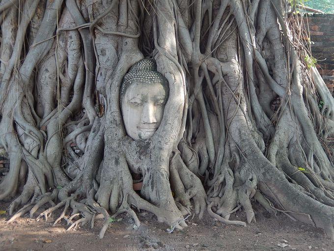 1.神秘!菩提樹の根から私達を見守るかのような、ワットマハタート