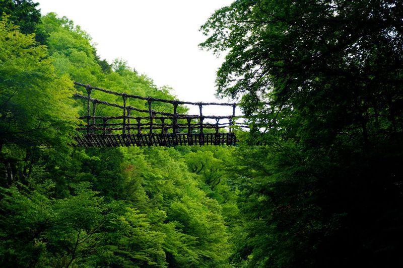 ゾクッとするほど深山幽谷!徳島の秘境「奥祖谷二重かづら橋」は知る人ぞ知るもうひとつのかづら橋