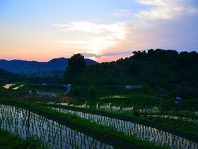 大阪で唯一「村」の付く市町村にある「下赤阪の棚田」の楽しみ方