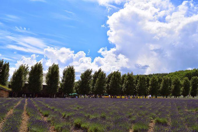 ラベンダー鑑賞をセットで!花の見頃を迎える7月初旬から中旬の訪問が特におすすめ!