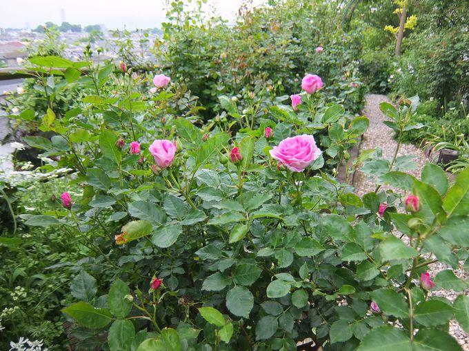 町を見下ろす本格的な英国式庭園!散策もOK!