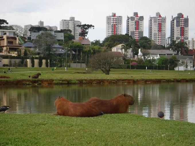 市民の憩いの場「バリグイ公園」
