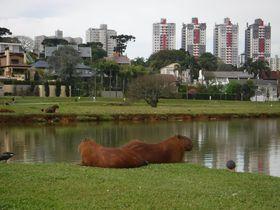野生のカピバラもびっくり!?「ブラジル一住みやすい街」クリチーバの魅力!