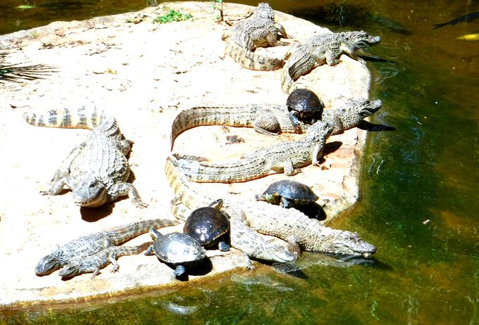 実は鳥だけじゃない!爬虫類も楽しめる鳥公園!