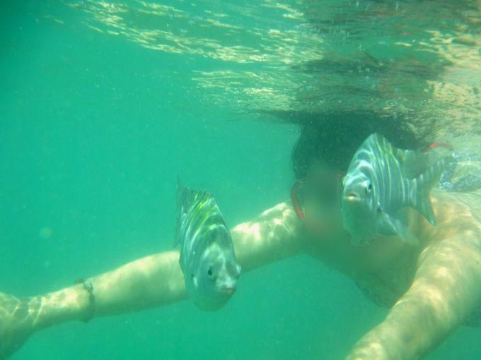 透き通るエメラルドの海で魚と泳ごう!