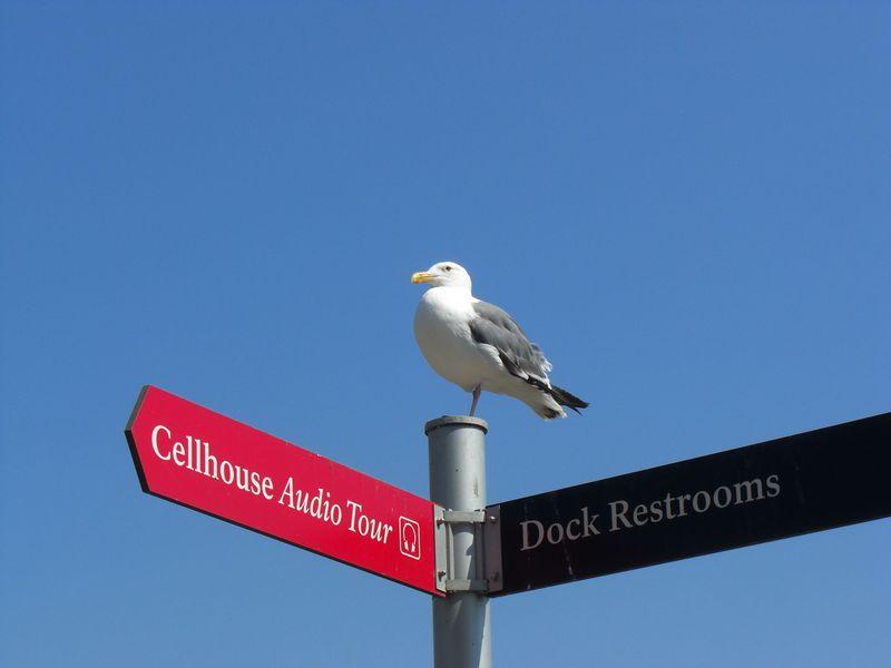 アメリカ サンフランシスコ!アルカトラズ島上陸ツアー!