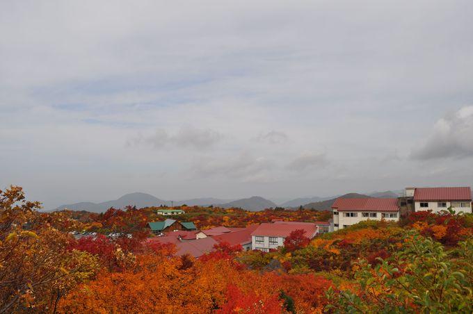 高台で振り向けば…そこに広がる紅葉の波