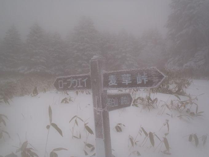 新雪で道がない!