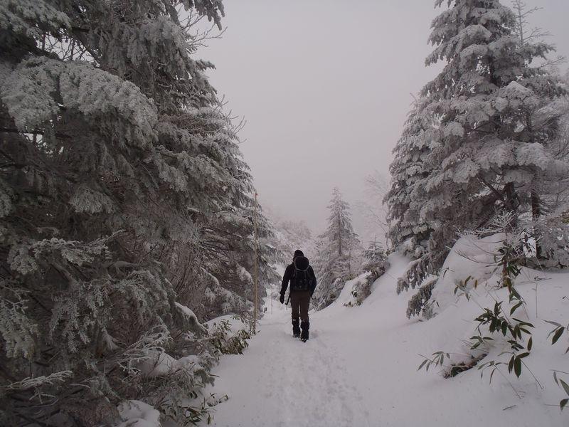 山頂だけど眺望はナシ?無理は厳禁!八ヶ岳・縞枯山の雪山登山