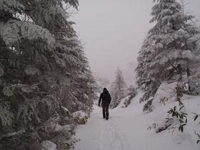 山頂だけど眺望はナシ?無理は厳禁!八ヶ岳・縞枯山の雪山登山|長野県|トラベルjp<たびねす>
