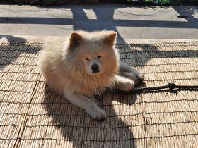 イカといで湯とアイドル犬!青森・鰺ヶ沢町は楽しみ満載|青森県|トラベルjp<たびねす>