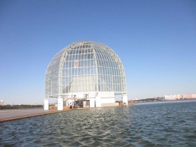世界中の海の生き物たちが観察できる、東京湾にポッカリと浮かぶガラスのドーム
