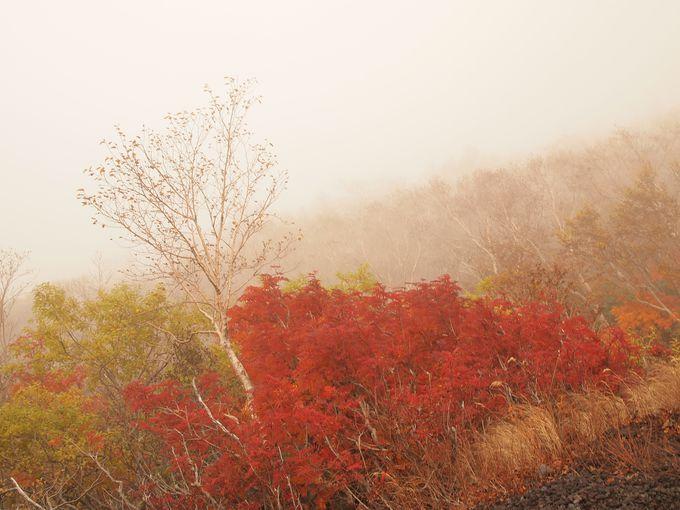 ガスってもなお美しい、秋の彩り