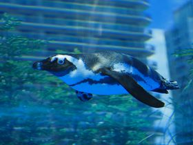 ペンギンが空を飛ぶ!?池袋「サンシャイン水族館 マリンガーデン」はココがすごい|東京都|トラベルjp<たびねす>