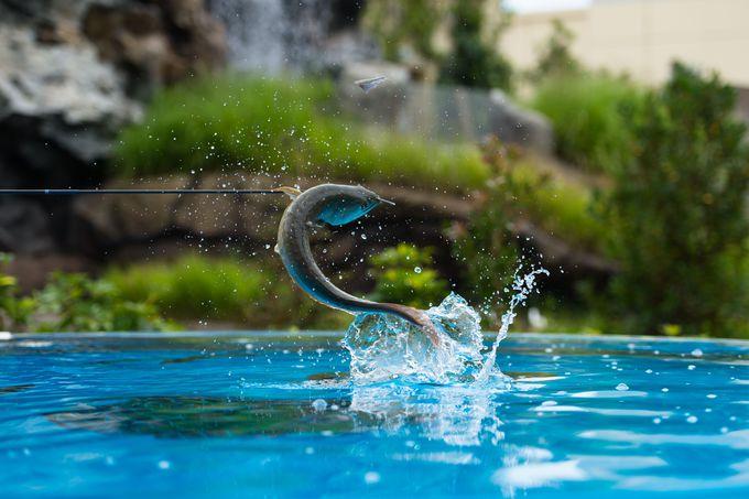「きらめきの泉」でアロワナ&ドラドの美しい姿を!