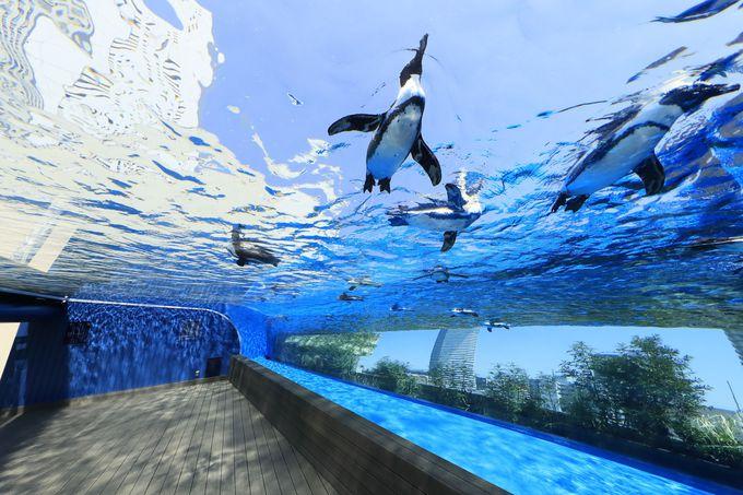 ペンギンが都会の空を飛ぶ!?「サンシャイン水族館(東京)」