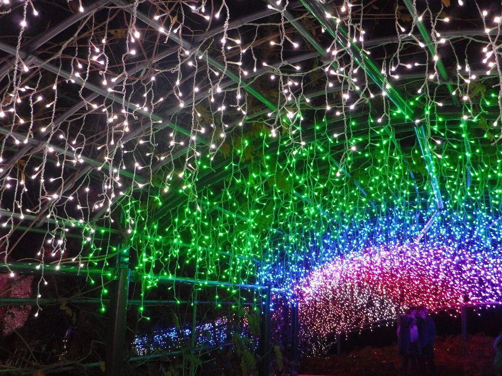 彩りパワーアップ! 60メートルの藤棚が光のトンネルに変身