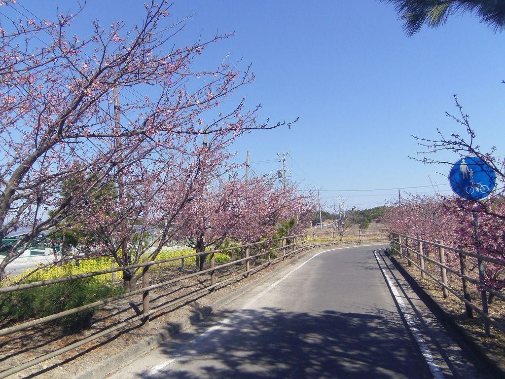 手を伸ばせば届いてしまう眼前で咲く河津桜