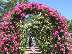 4ヶ所の異なる魅力!浜名湖&浜松市内で魅惑のバラ園めぐり|静岡県|トラベルjp<たびねす>