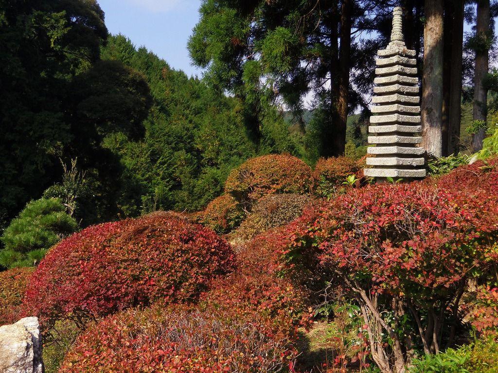 「殿さまの間」からドウダンツツジの紅葉を眺める至福の時間