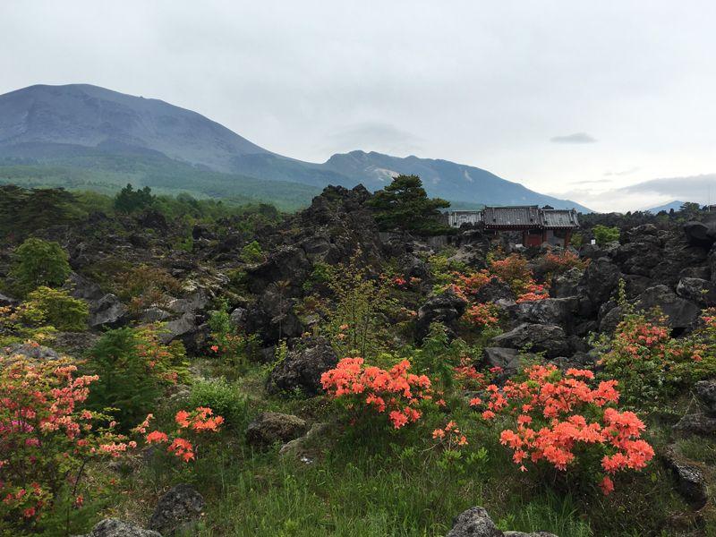 珍しいヒカリゴケや高山植物たち