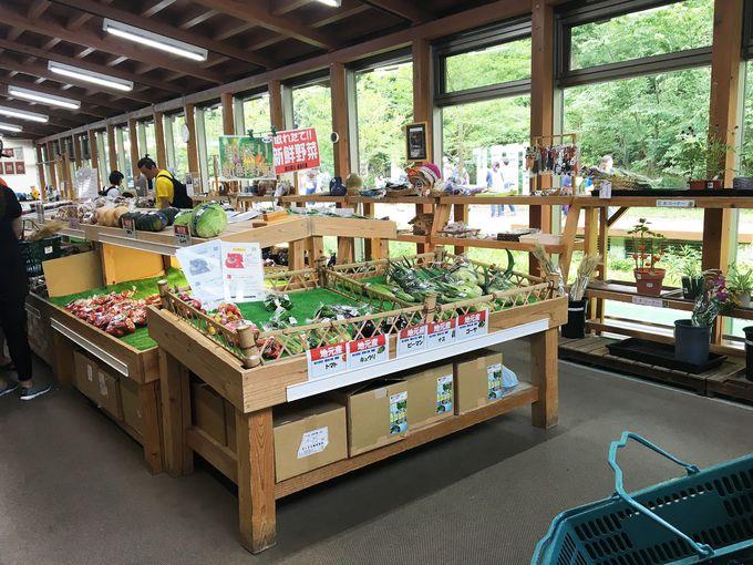 大人気の新鮮野菜は、併設の物販直売所「朝露」で。