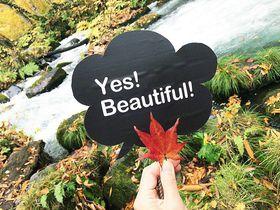 カラフルな葉っぱや苔がお出迎え!青森県「奥入瀬渓流」|青森県|トラベルjp<たびねす>