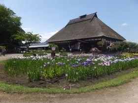 五感を研ぎ澄ませ~十和田市「手作り村鯉艸郷」は四季の花溢れる観光農園|青森県|トラベルjp<たびねす>