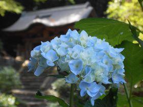アジサイのお寺としても有名!島根県松江市「月照寺」を味わう|島根県|トラベルjp<たびねす>