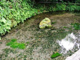 日本有数の名水!鳥取「天の真名井」で癒しの時間を過ごす|鳥取県|トラベルjp<たびねす>