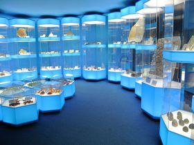 神秘のナイトミュージアムも体感!島根「多根自然史博物館」|島根県|トラベルjp<たびねす>