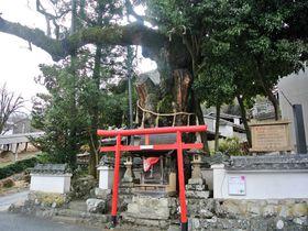陶器の魅力や歴史を体感!兵庫県「篠山市今田地区」|兵庫県|トラベルjp<たびねす>