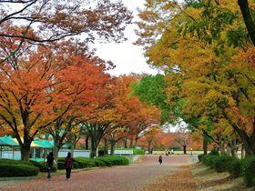 紅葉を存分に堪能!大阪の癒し自然スポット「万博記念公園」