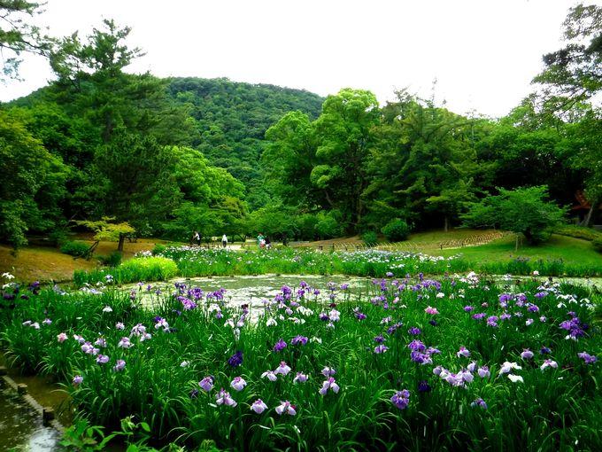 一歩一景の風景!栗林公園の花を満喫しよう!