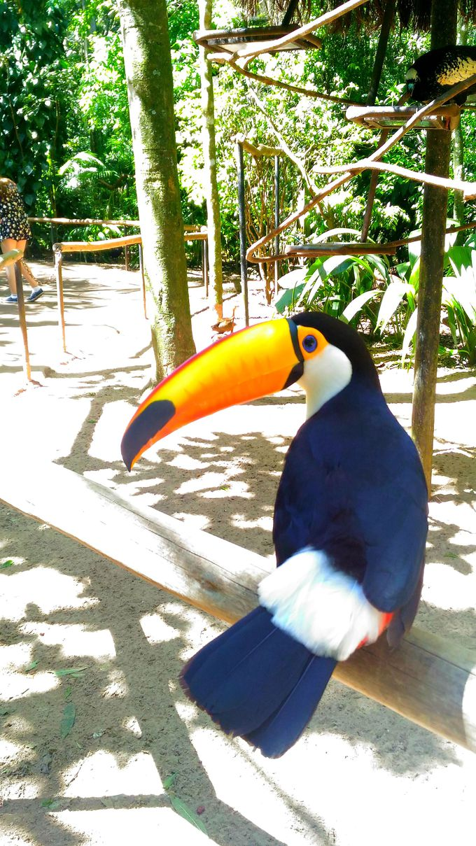 観光名所がズラリ!イグアスで訪れたい観光スポットを制覇しよう!